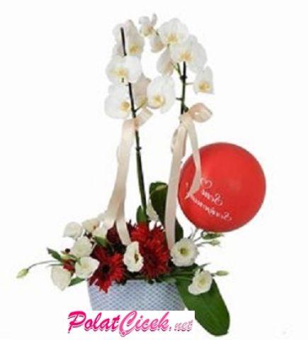 Lisyantuslu 2 Köklü Orkide