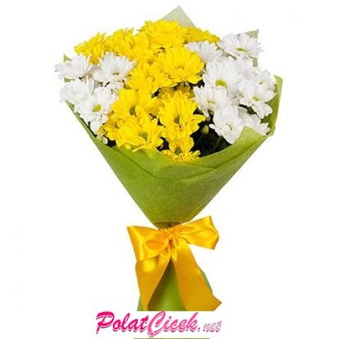 Sarı Ve Beyaz Papatya
