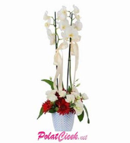 Lisyantuslu Orkide